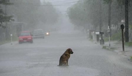 Apel la fărâma de suflet din noi toți, pentru viaţa prietenului cel mai bun al omului: câinele. În Bucureşti – […]