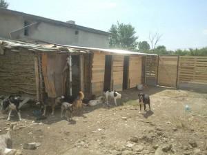 Aşa-zisul adăpost improvizat de Alexandra Sarău.