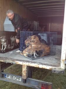 Camionul cu care mutau câini prin România Bagdat Ozarslan şi Maria Tudor în toamna anului trecut.