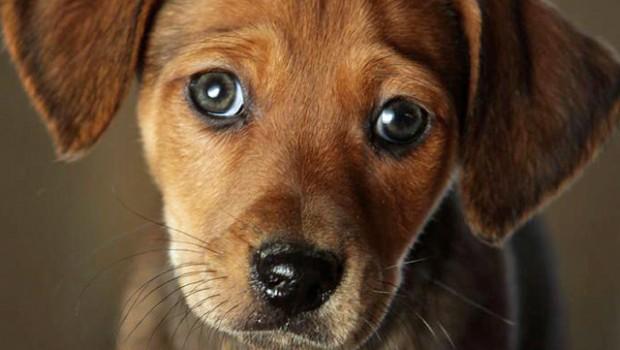 Sunt sigură că mulţi dintre români au auzit despre situaţia dramatică a lui Max, câinele-erou al MApN folosit în teatrele...