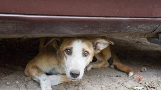 Despre situaţia disperată a animalelor din multe adăposturile de stat din România s-a scris şi s-a vorbit mult […]