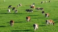 """Jaful din agricultură, posibil numai cu complicitatea autorităţilor Motto: """"Vai de biet român săracul! Îndărăt tot dă ca racul, […]"""