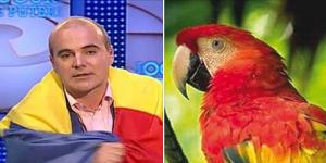 doi-papagali-ok