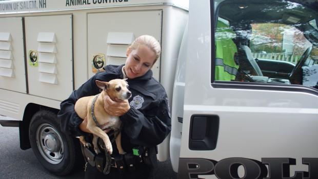 Federaţia pentru Protecţia Animalelor si Mediului (FPAM) Adresă corespondenţă: Bucureşti, str. Heleşteului nr.3, Sector 1 Cod de înregistrare fiscală: […]