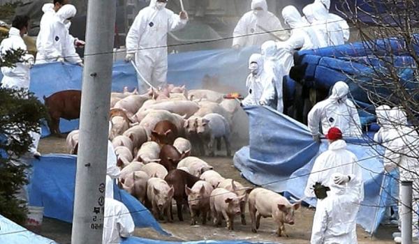 În anul 2015, Comisia Europeană a adoptat o strategie privind pesta porcină africană pentru statele din Uniunea Europeană, a […]