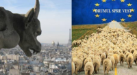 """Urcatul oilor la munte… """"muntele"""" Parlamentului UE PNL a obţinut, la alegerile europarlamentare din 26 mai 2019, […]"""