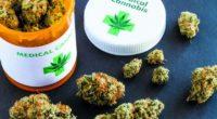 Aproape 100 de parlamentari din toate partidele propun legalizarea canabisului în scop medicinal Pacienții cu boli cronice terminale din […]