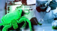 Congresul Statelor Unite a votat pentru ca Pentagonul să fie investigat pentru utilizarea insectelor ca armă biologică Într-un episod […]