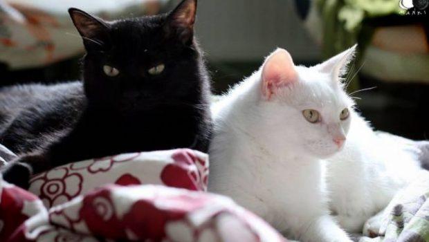 Joia neagră, pisica albă, pisica neagră Așa cum am scris de duminică, statul paralel […]