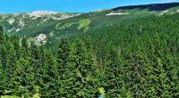 """Operațiunile de exploatare în munții Retezat, Godeanu, Sarcu și Vîlcan din România au dus la dispariția ultimului """"Intact Forestry […]"""