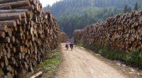 """Klaus Iohannis, declarație de ultimă oră: """"Tăierile ilegale de lemn trebuie stopate."""" Ipocrizie cât încape și ascunderea adevărului sub […]"""