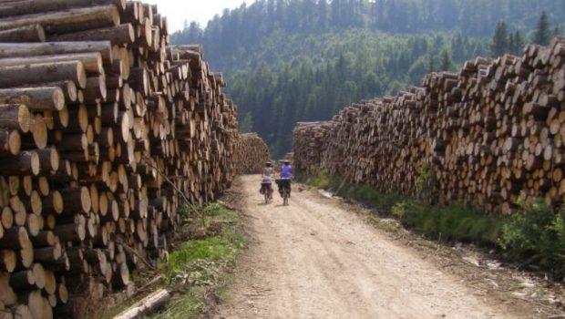 Defrișarea pădurilor românești de către austrieci și ipocrizia ...