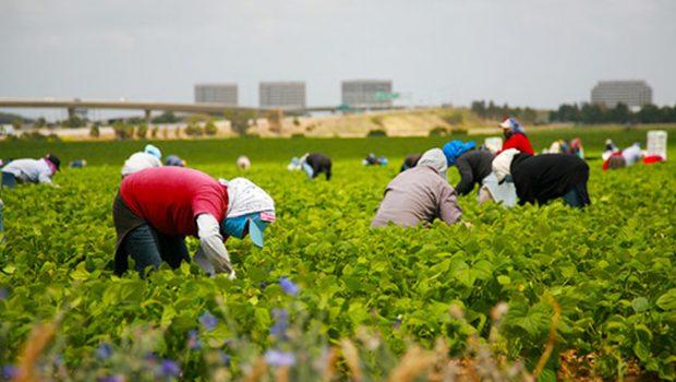 """În plină criză de coronavirus, Italia, Spania, Germania își cer """"drepturile"""", capete de români care să le muncească pământurile. […]"""