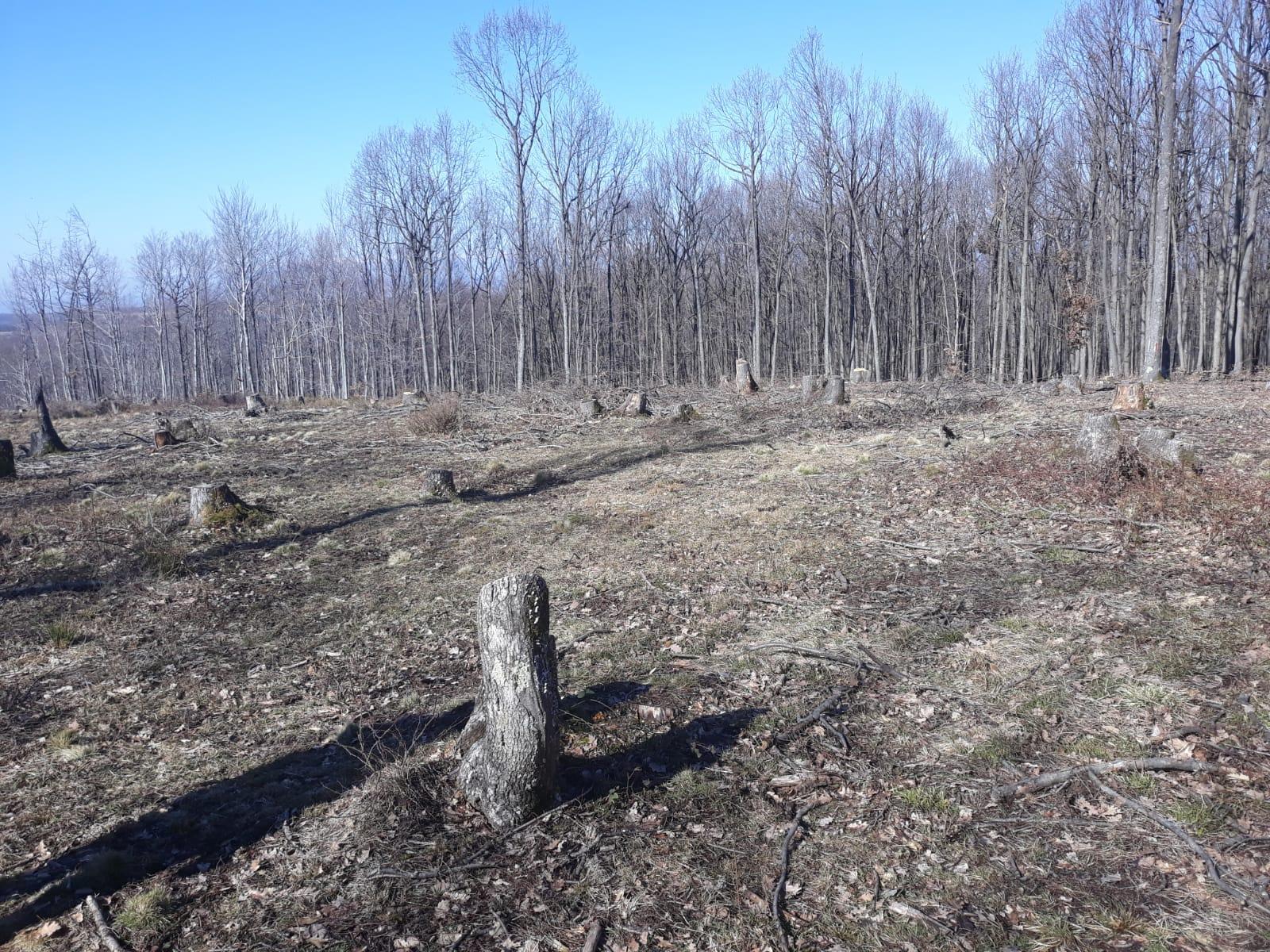 Hoții de lemn și complicii acestora au chelit dealurile Gorjului La circa un an după ce Comisia Europeană a atenționat […]